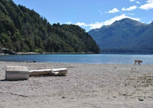 Vista del Lago Nahuel Huapi (Brazo Blest) con su hermosisima playa.<div id='social-area' ><nav id='social'><ul><li><a title='Comparti en Facebook' target='ventana' onClick='window.open('','ventana','width=300,heigth=300,left=100,top=50');' href='http://www.facebook.com/sharer.php?s=100&p[url]=http://www.bungalowsdeltrebol.com.ar/Foto/DSC_0185.html' ><span class='font-icon-social-facebook'></span> </a></li><li><a target='ventana' title='Comparti en Twitter' onClick='window.open('','ventana','width=300,heigth=300,left=100,top=50');  href='http://twitter.com/share?text=Foto de Bungalows del Trebol @Del_Trebol &url=http://www.bungalowsdeltrebol.com.ar/Foto/DSC_0185.html'><span class='font-icon-social-twitter'></span></a></li></ul></nav></div>